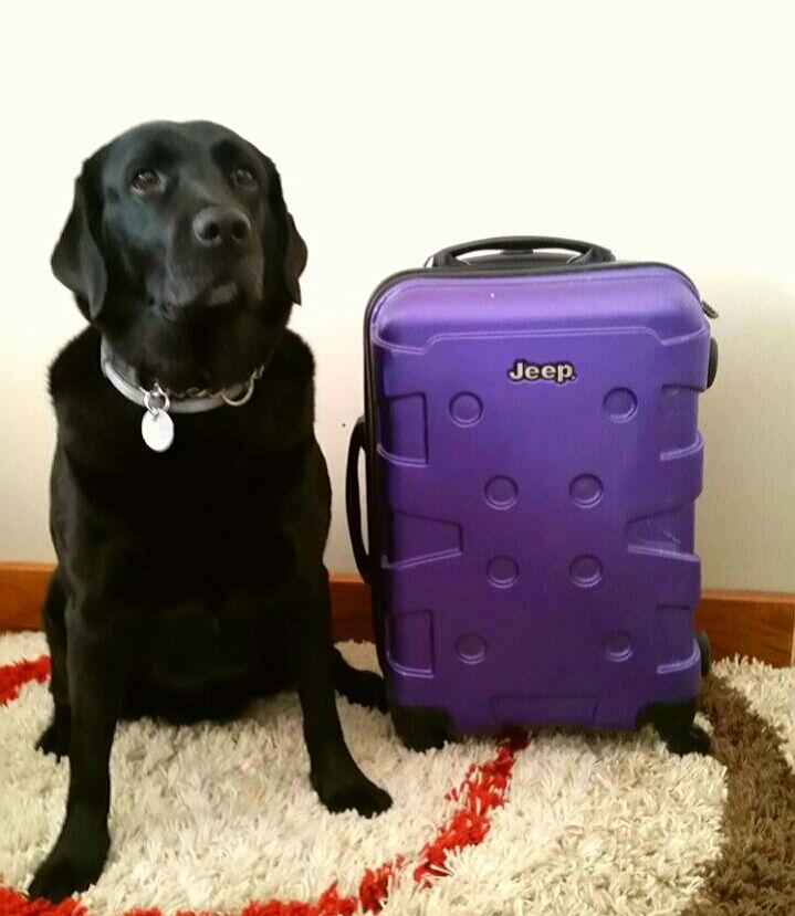 Hilary está sentada do lado esquerdo da mala, a mala é praticamente do tamanho dela, aquelas quadradinhas e é lilás